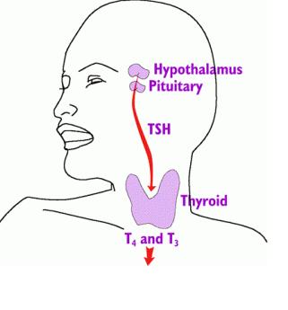 Best way To Test Hypothyroidism | hypothyroidismrevolution24h